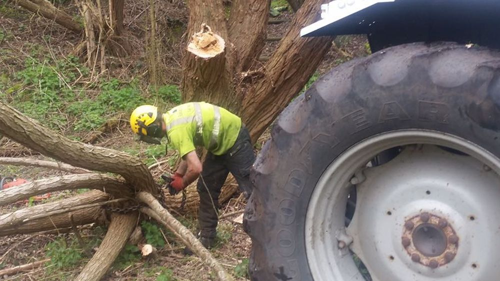 Tree Surgeons | Staines, Middlesex Barkland Tree Specialists